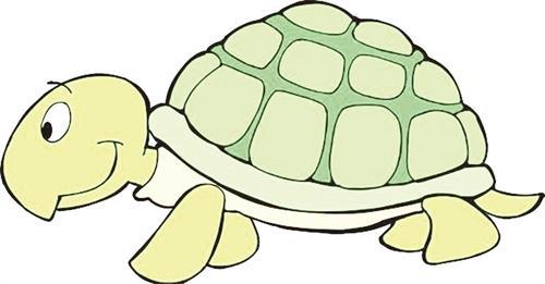 妈妈给我买回来一只小乌龟